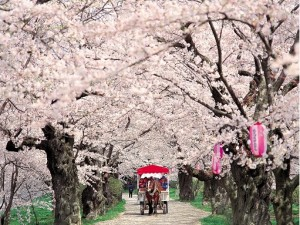 9 Day Cherry Blossom of Northern Japan Small Group Tour